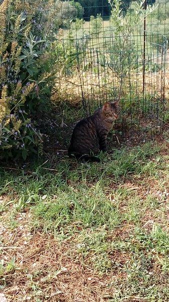 Farinelli aka Nellino, vivendo gato livre e limpo