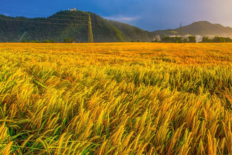 Golden fields of Zlato Polje (Golden Fields) are just minute or two walk away from the apartment.