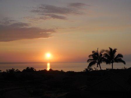 Palm Tree,Tree,Dawn,Dusk,Red Sky