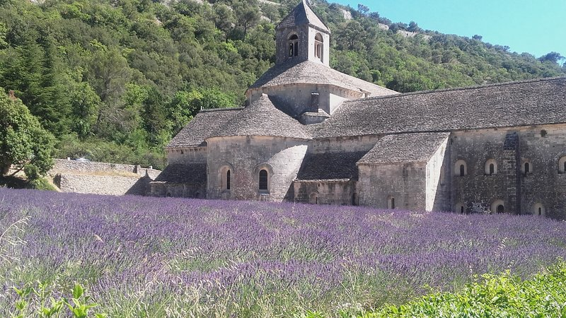 the cicadas house in Provence