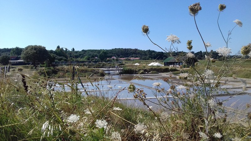 The marshes of Olonne at 3km
