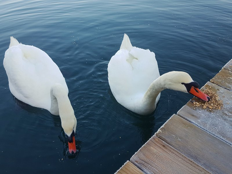 Our feathery friends visit the dock regularly