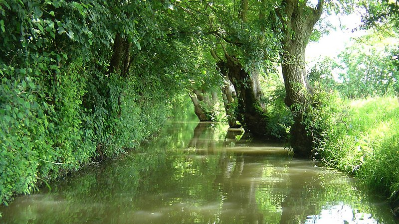 Venecia verde