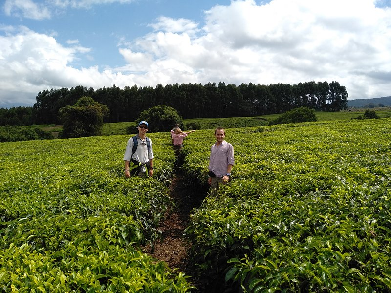Tea tour