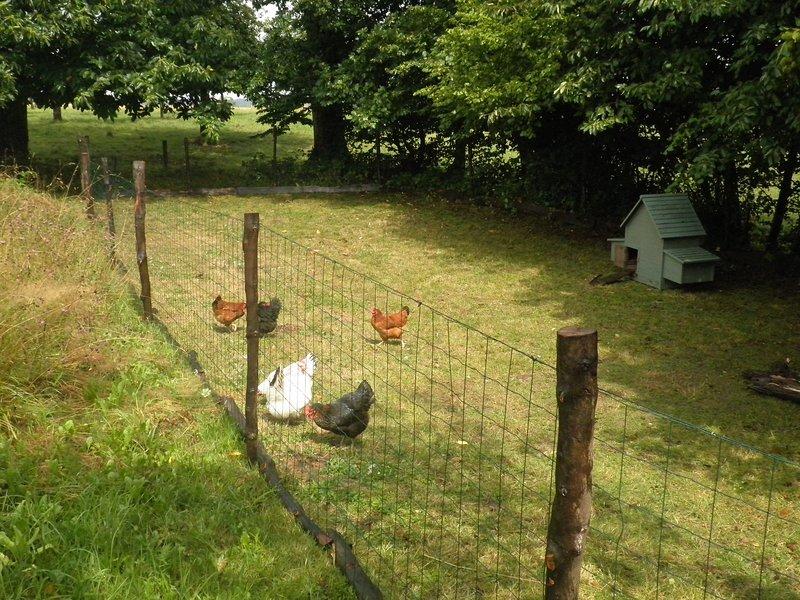Ovos frescos disponíveis de nossas galinhas