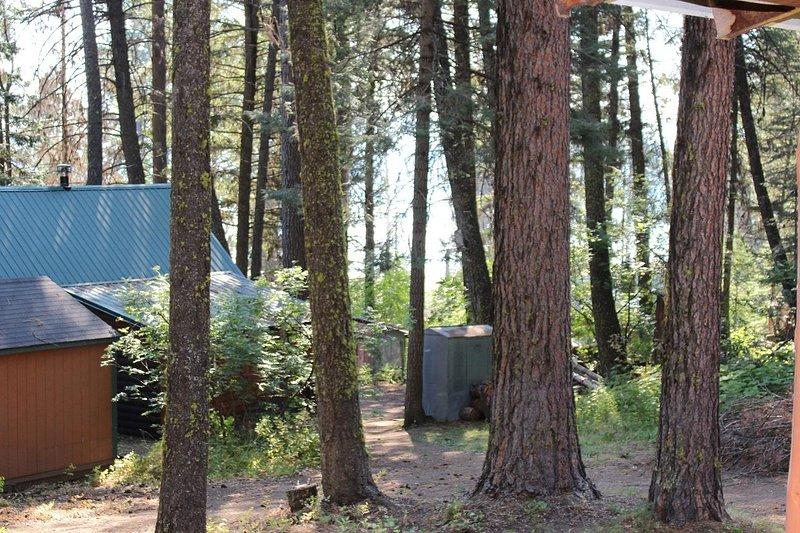 Cabin Escape - Surrounding pine trees