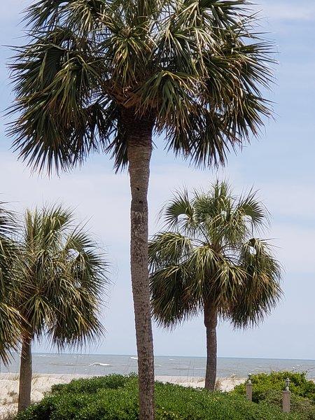 Palmetto Dreams Wild Dunes Port O Call Condo Updated