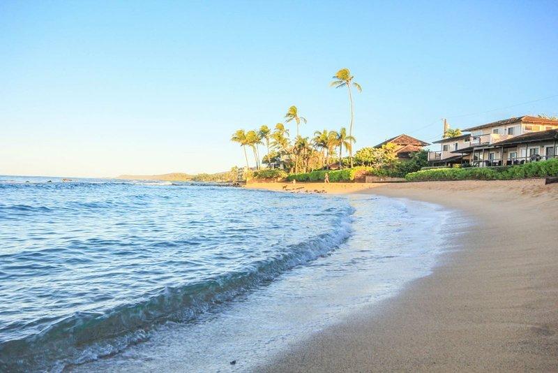 Kuhio Shores 207 Updated 2019 1 Bedroom House Rental In