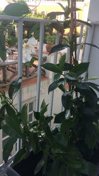Casa vacanze Benito, vacation rental in Forio