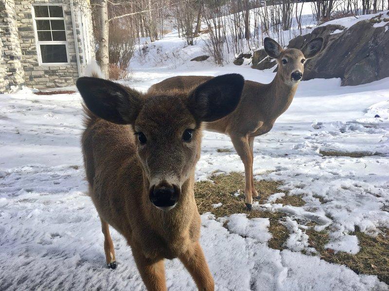 Visitantes furiosos - eles comem da sua mão!