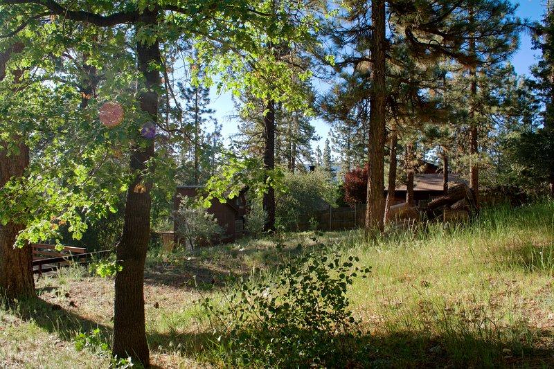 Gorgeous Backyard View