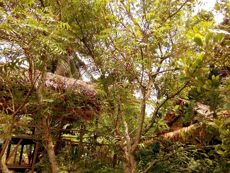 Ancient Gardens ( Eco Lodge )