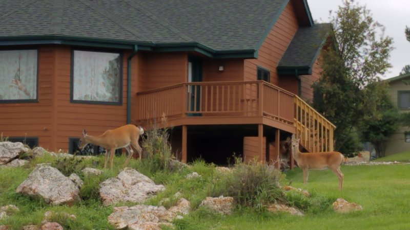 Front of home with deer