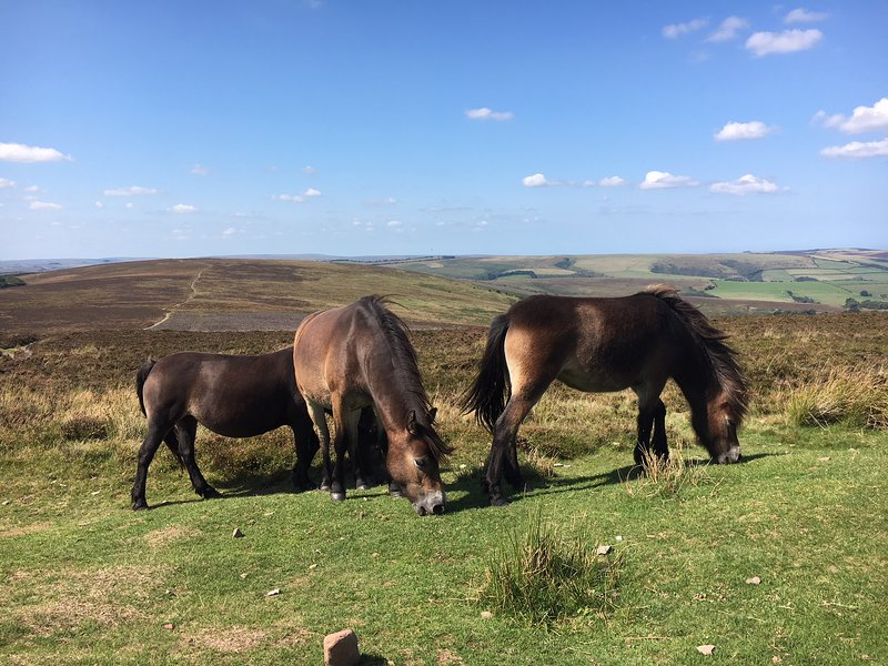 Stunning moorland views from the top of Dunkery
