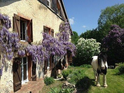 Chambres d'hôtes à Ban de Laveline, holiday rental in Fraize