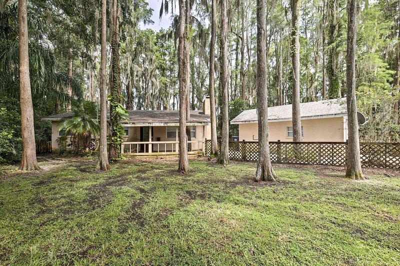 Innamorati degli imponenti alberi di latifoglie ricoperti di muschio spagnolo!