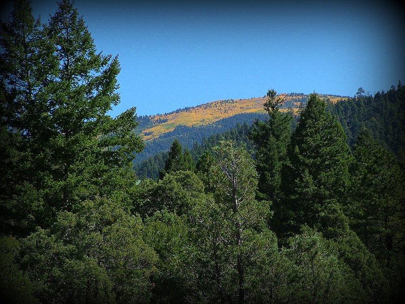 Letar upp i Taos Canyon från hyttdäcken; Fall aspens är flammande i guld!