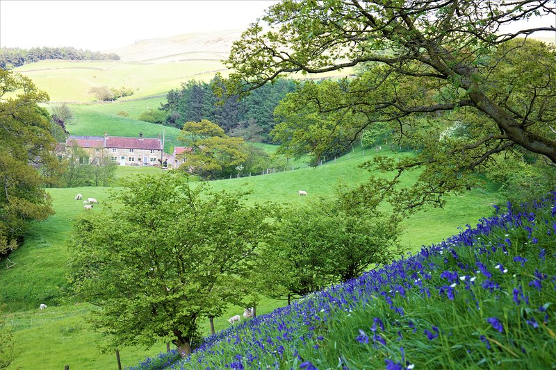 Bluebells Cottage, location de vacances à Hutton Rudby