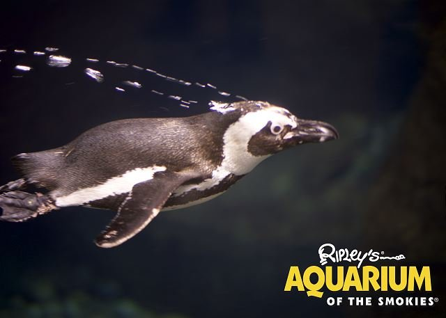 Free Ticket to Ripley's Aquarium of the Smokies
