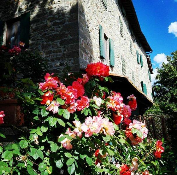 Podere I Rovai-apt IL RIFUGIO-amazing view Tuscany, alquiler vacacional en Reggello