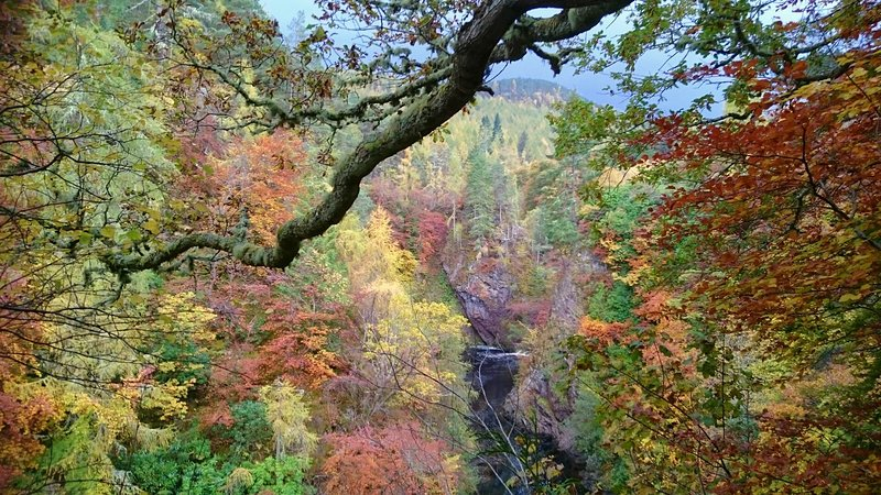 Autumn colour of gorge and river from garden