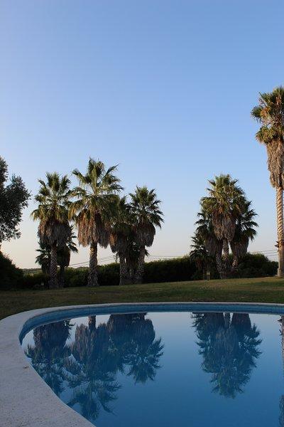 Casa do Marco - Floresta, holiday rental in Magoito