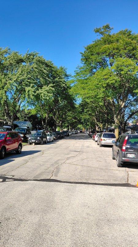 Tree Line Street -- Like a Postcard!