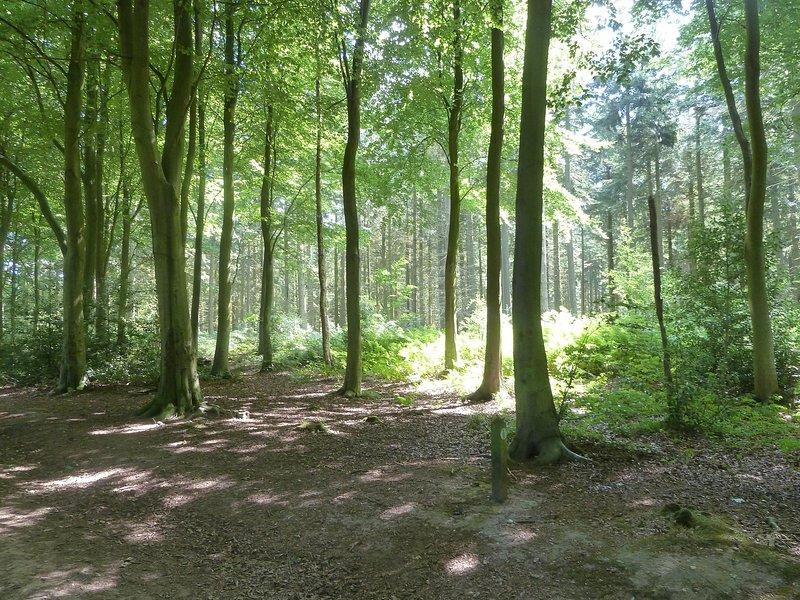 Bacton Woods voor boswandelingen