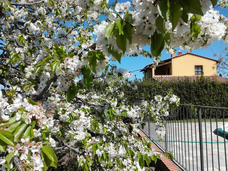 Apartment Papavero, between Volterra and San Gimignano, holiday rental in Volterra