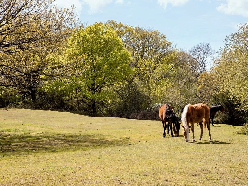 Enjoy walks in the beautiful New Forest