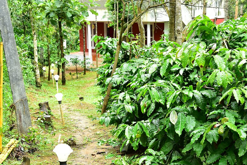 Chikmagalur cottages- 4L, holiday rental in Sakleshpur