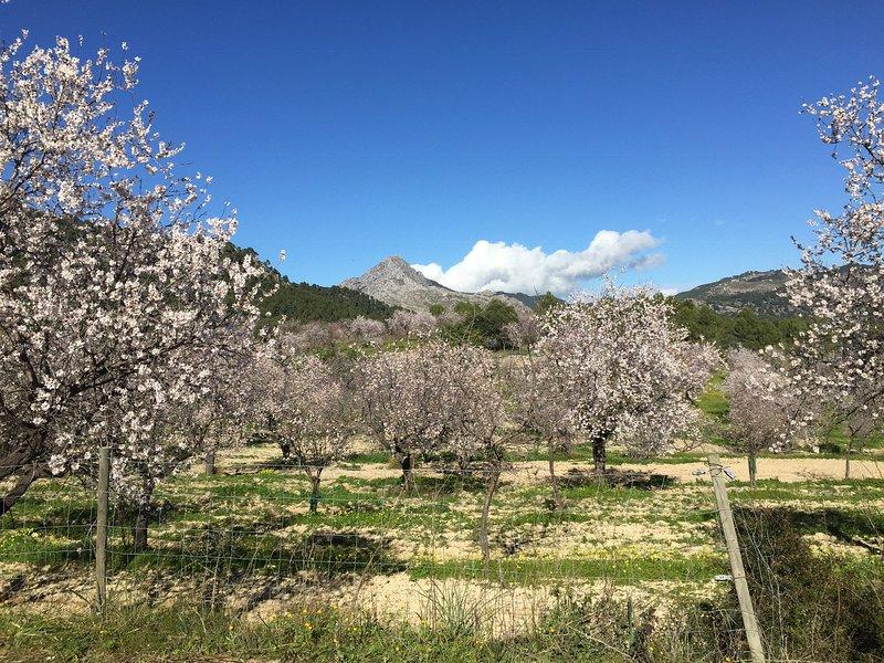 Majorque au printemps, époque de la fleur d'amandier