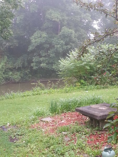 View of the creek in back yard