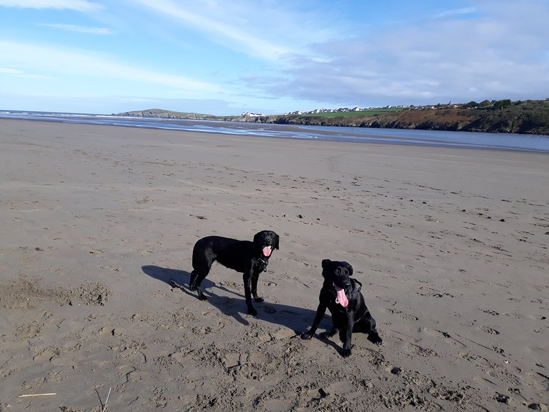 Poppit Sands is one of our favourite beaches and has been visited by many of our guests