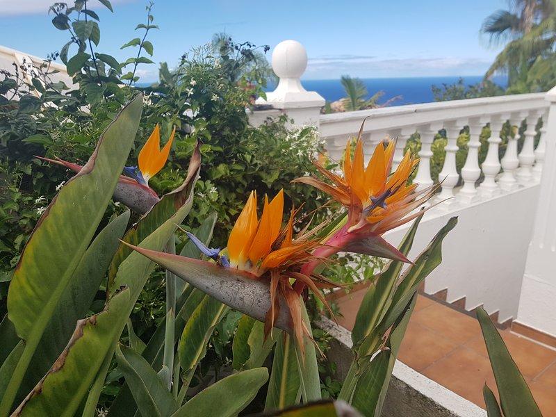 western sun terrace