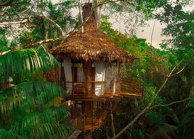 exterior shot of treehouse 5