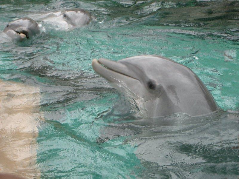 Dolphin's at Seaworld.