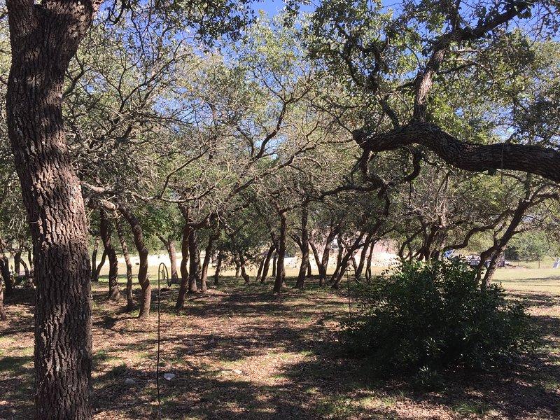Plenty of trees and wildlife
