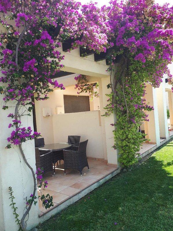 Terrace in full bloom