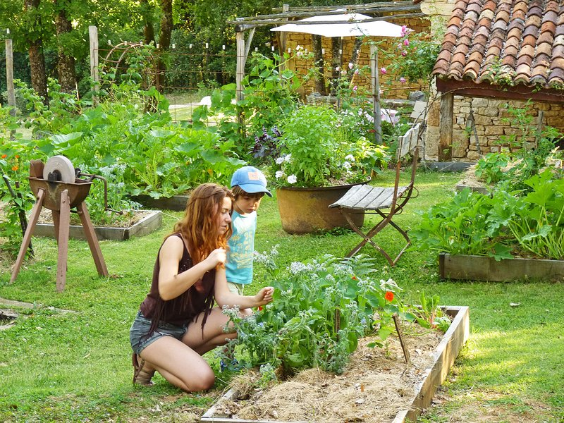 self-service in our garden. Aromatic plants, tomatoes, strawberries...