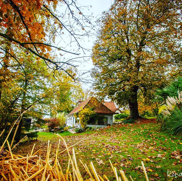 the cottage in the beautiful colors of autumn