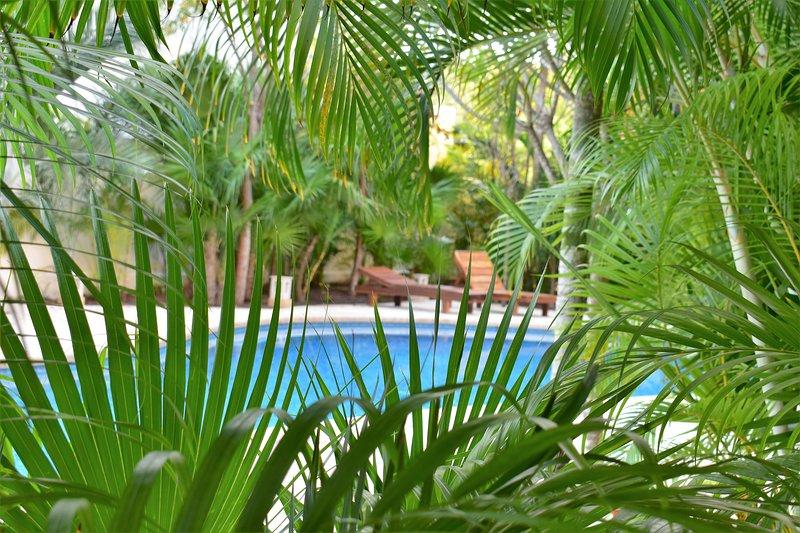 Visit our jungle oasis getaway.
