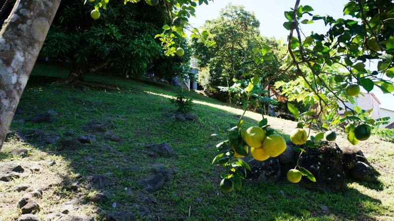 Villa Ansalane - Terrain arboré (Oranger, Bois d'Indes, Bananiers, Manguiers, Cerisier Acerola...)