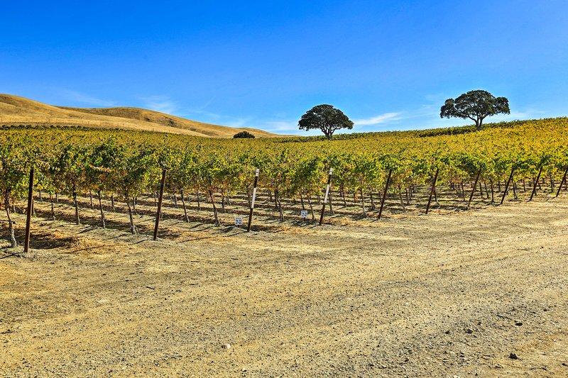 Pick up organic produce and fresh wine around the farm.