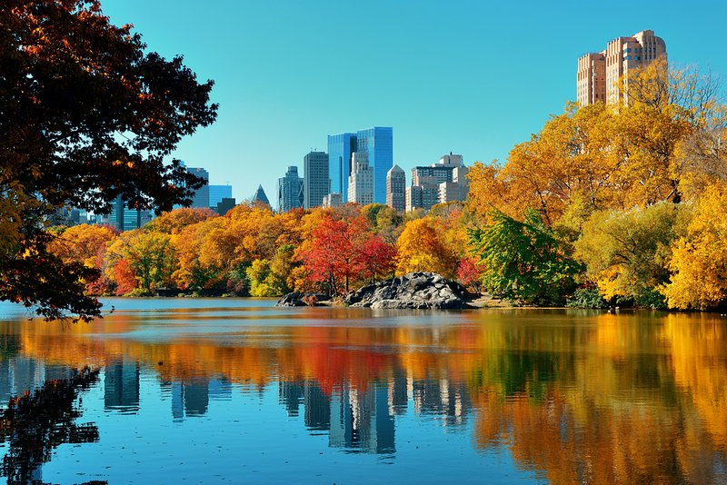 25,000 trees in Central Park make a spectacular foliage during Fall