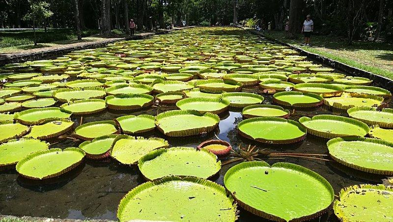 Botanical Garden Pamplemousse