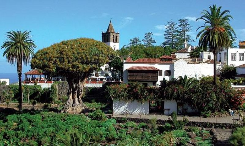 Villa de Icod de los Vinos.  Arbol milenario del Drago