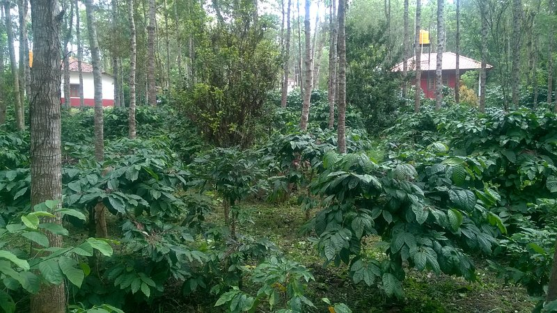 RAI  DELUXE COTTAGE  Coorg ,Suntikoppa, holiday rental in Coorg