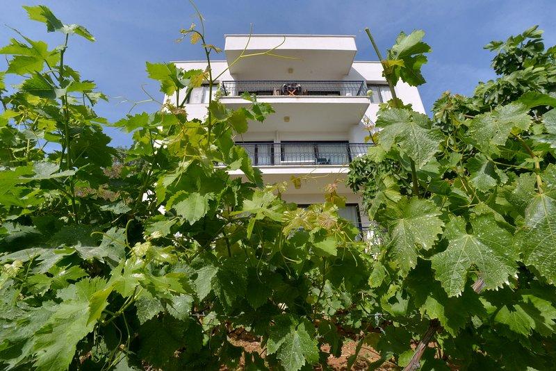 Front garden. Our grape vineyard.