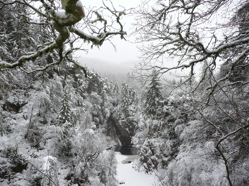 Winter view of gorge from garden.